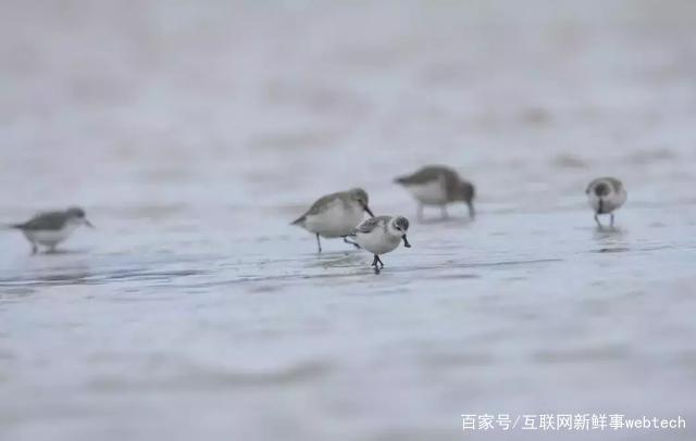 每少一块儿湿地,可能就有一种鸟儿消失