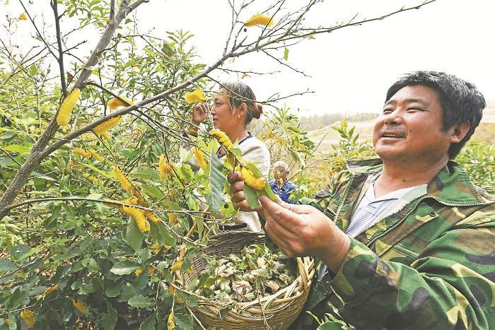 """安徽滁州:""""三树一苗"""",绿了荒山富了民_最新信息"""